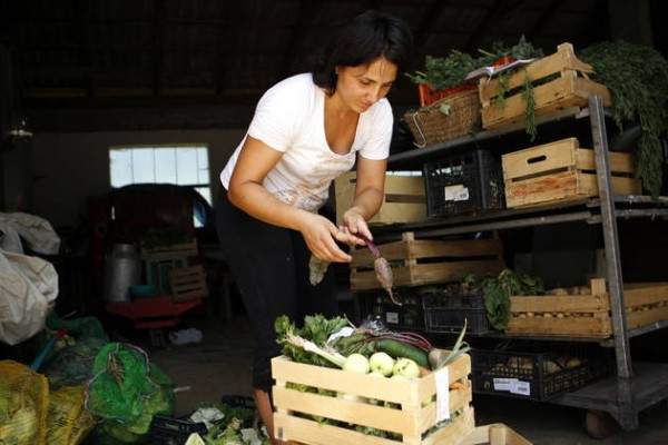 ekolopka kmetija kos