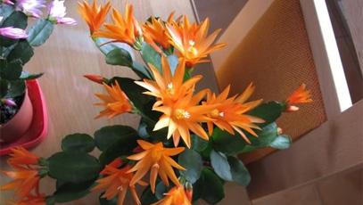 bo_kaktus