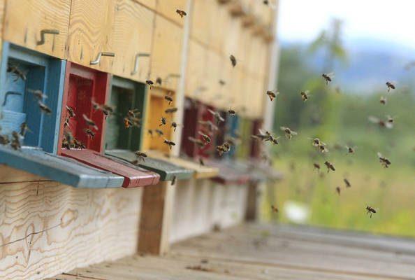 čebelnjak z čebelami