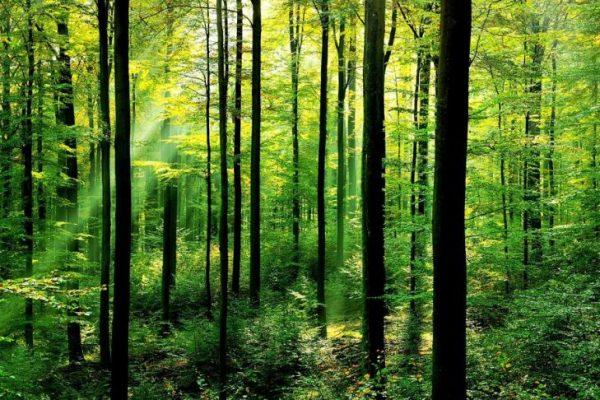 woods1-fb459038